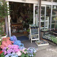 Flower shop Poppy